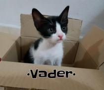 VADER*