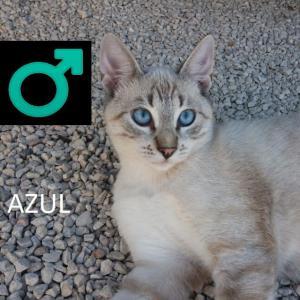 AZUL 2*