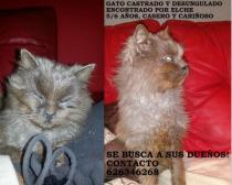 Gato Elche